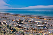 Driftwood along the Bay of Fundy, Advocate Harbour, Nova Scotia, Canada
