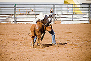 November 2, 2008 -- PHOENIX, AZ: THOMAS YOUNG, from the Tohono OOdham Indian reservation in Sells, AZ, participates in calf roping at the Arizona High School Rodeo at the Arizona State Fair in Phoenix. Teams from across the state participate. The Arizona High School Rodeo Association sponsors a full season of high school rodeo that culminate in a championship rodeo in June.  Photo by Jack Kurtz / ZUMA Press