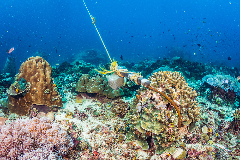 A boat anchor digs into a coral reef in The Philippines.