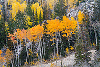 Above Park City, the bright Fall colors shine against the rocky outcrops.