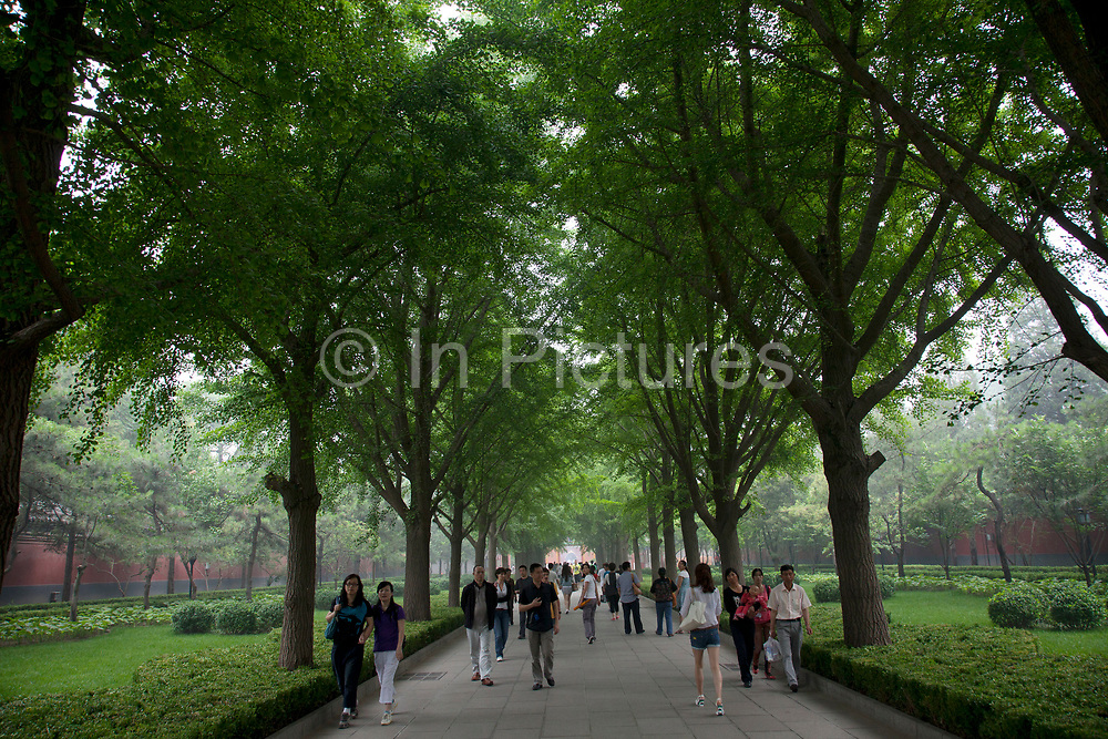 """Tree lined (with Ginko trees) entrance avenue at Yonghe Temple, also known as the """"Palace of Peace and Harmony Lama Temple"""", the """"Yonghe Lamasery"""", or - popularly - the """"Lama Temple"""" is a temple and monastery of the Geluk School of Tibetan Buddhism located in the northeastern part of Beijing, China. It is one of the largest and most important Tibetan Buddhist monasteries in the world. The building and the artworks of the temple is a combination of Han Chinese and Tibetan styles."""