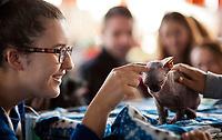 11.10.2015 Bialystok woj podlaskie Miedzynarodowa Wystawa Kotow Rasowych N/z nagi kot rasy Sfinx fot Michal Kosc / AGENCJA WSCHOD