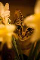 Tubbins the chubbins catching a whiff of the spring air off of some freshly cut daffodils.