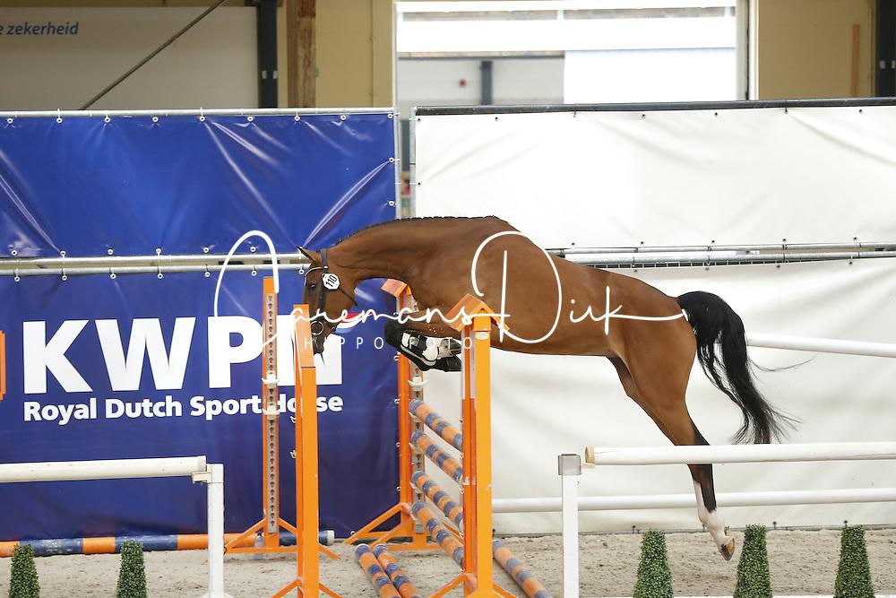110 - Giletto<br /> Vrijspringen 3 jarige Merries<br /> KWPN Paardendagen - Ermelo 2014<br /> © Dirk Caremans