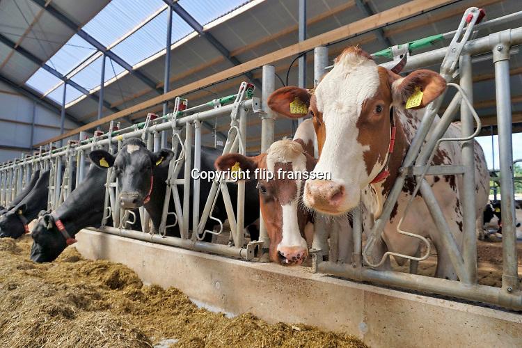 Nederland, Ooij, 13-10-2019 Koeien in de stal. Koeienstal . FOTO: FLIP FRANSSEN