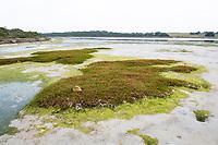 Salt marsh at low tide in an estuary, De Mond Nature Reserve, Western Cape, South Africa