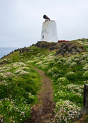 South Horn at Isle of May National Nature Reserve, Firth of Forth, Scotland, UK