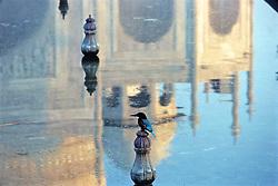 Bird At Taj Mahal