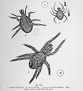 Artwork of tiny Organisms under microscope From the book '  The microscope : its history, construction, and application ' by Hogg, Jabez, 1817-1899 Published in London by G. Routledge in 1869 with Illustrations by TUFFEN WEST