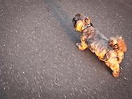 Hoodoo on his last walk.  Thank You Hoodoo Peace