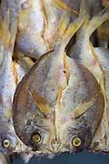 Split Dried fish in Sandakan market, Sabah, Borneo
