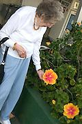 My 92 year old mom admiring hibiscus at Orange Blossom Groves produce shop.  Seminole Tampa Bay Area Florida USA