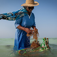 Zanzibar Seaweed Company