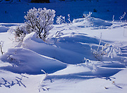 Snowswept vegetation, El Morro National Monument, New Mexico.