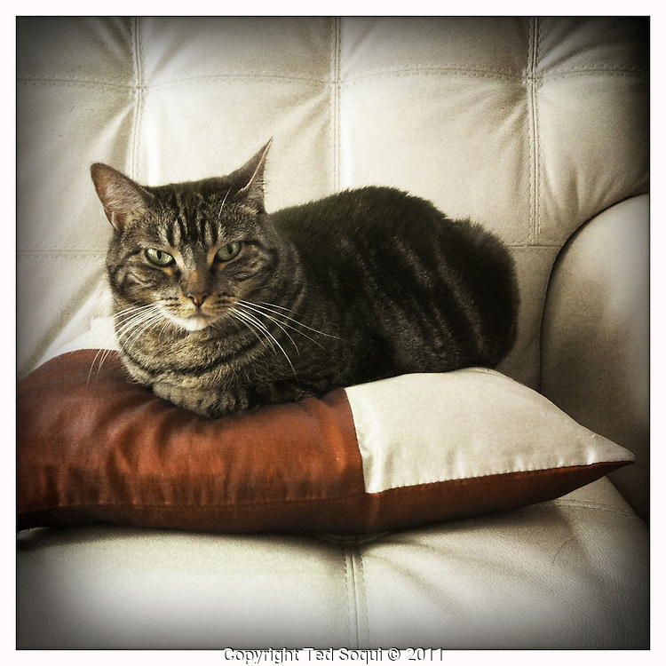 Pippa the cat sitting on a pillow