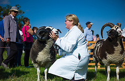 © Licensed to London News Pictures.12/08/15<br /> Danby, UK. <br /> <br /> A woman holds her ram steady as a judge looks on during an event at the 155th Danby Agricultural Show in the Esk Valley in North Yorkshire. <br /> <br /> The popular agricultural show attracts competitors and visitors from all over the surrounding area to this annual showcase of country life. <br /> <br /> Photo credit : Ian Forsyth/LNP