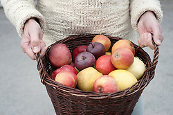 Mid section of a man holding basket full of apples in his hands in front of wholefood shop, Bavaria, Germany