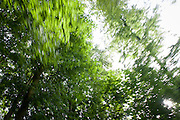 Blurred vegetation of beech trees during a daydream moment in a Somerset forest.