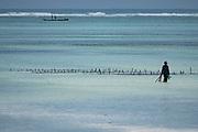 Growing algae on the eastern shores of Zanzibar