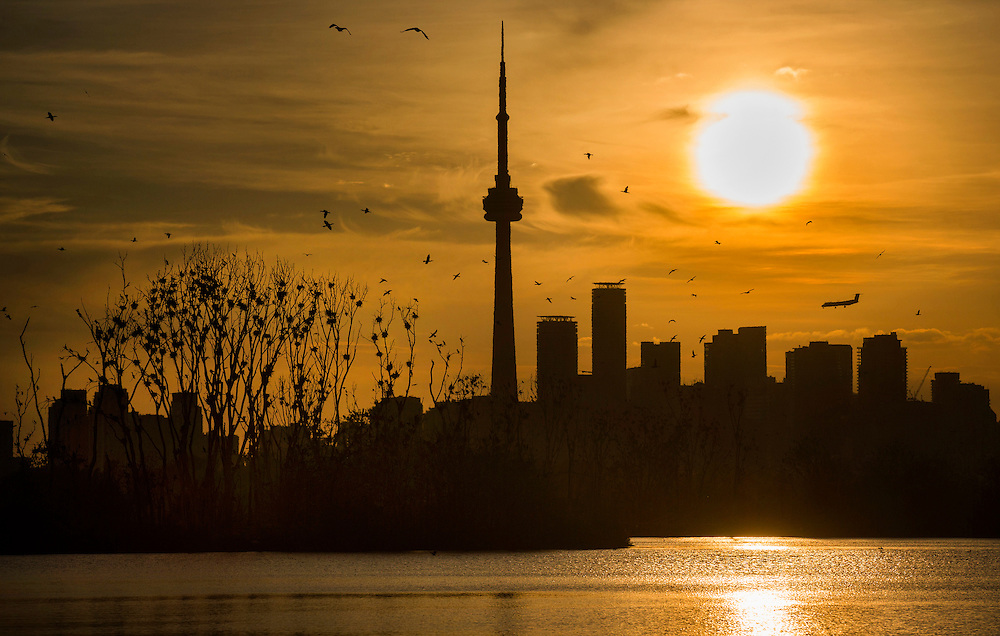 The sun sets behind the skyline as Double Crested Cormorants birds nest in a tree at Tommy Thompson Park as a plane lands at the Toronto Island Airport in Toronto, May 26, 2015.    REUTERS/Mark Blinch