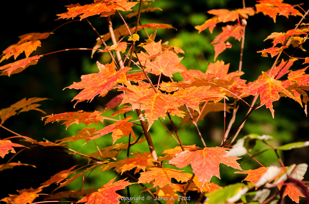 This little group of leaves looks to be basking in the sun creating a slight reflected glow