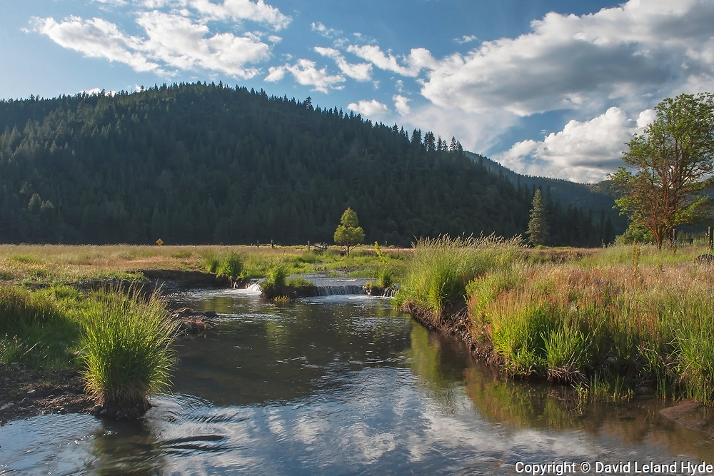 Hosselkus Creek at Main Ranch House, Genesee Valley Ranch, California Mountains, Irrigation, Tall Grass, Green Pastures