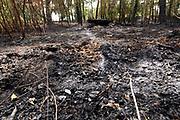 Nederland, the Netherlands, Well, 1-8-2018Door de aanhoudende droogte komen veel berm en heidebranden voor . Hier op de Bergse Heide, onderdeel van natuurgebied de Maasduinen waar rond de 50 hectare afbrandde .Foto: Flip Franssen