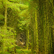 One deep look among the green forest trees in Glendalough national park.