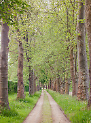 Tree lined country lane in the .Dordogne region, France