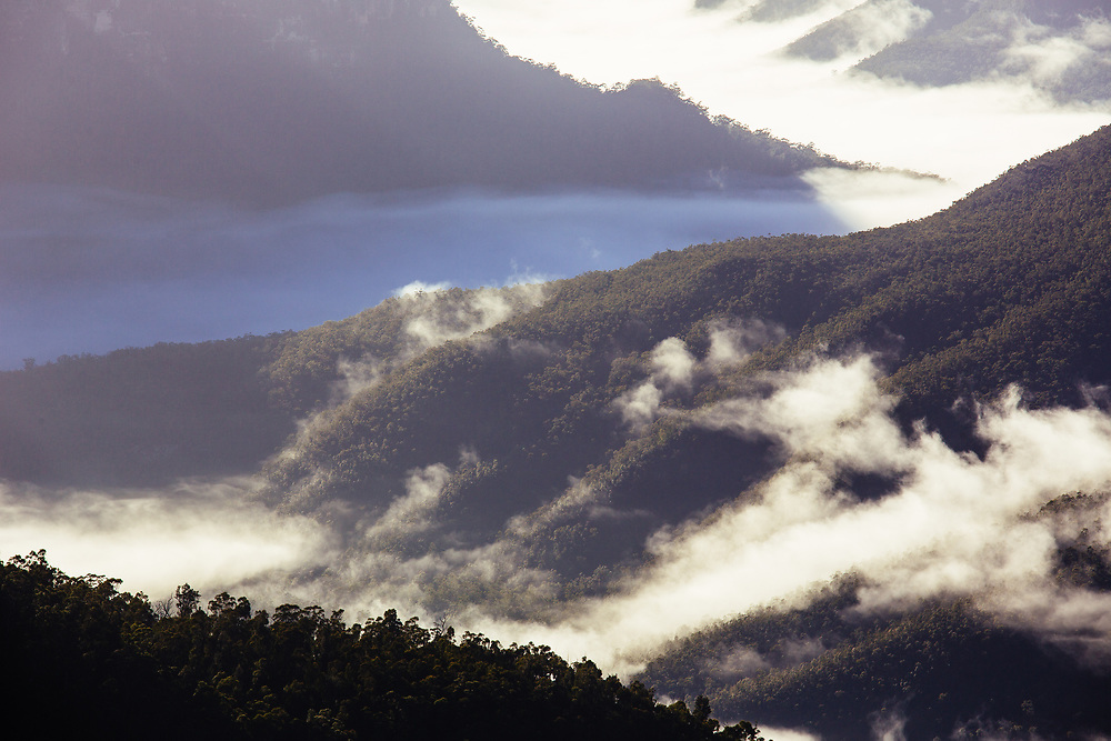 Winter fog rolls through the turning Grose Valley after rain the previous day. Blue Mountains National Park.