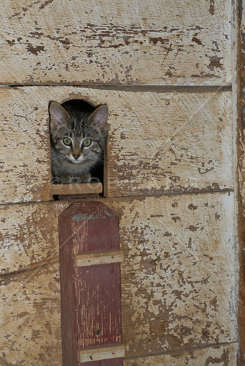 cat looking out of a hole in a wall