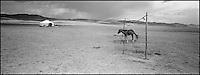 Mongolie. Campement nomade dana la province d'Arkhangai. // Mongolia. Nomade Camp, Arkhangai province.