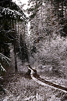 Podlasie, 30.11.2020. Pierwsze wieksze opady sniegu na Podlasiu tej zimy N/z osniezone drzewa w lesie fot Michal Kosc / AGENCJA WSCHOD