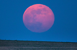 © Licensed to London News Pictures. 19/04/2019. Chichester, UK. A full Pink Moon rises over fields near Chichester, West Sussex. April's full moon is named after pink flowers called phlox – that bloom in spring. Photo credit: Peter Macdiarmid/LNP