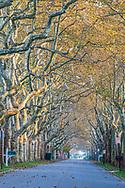 Row of Trees, Street, Wyandanch Ln, Southampton, NY