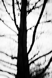Abstract  of a tree in the Winter