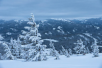 The trees at the top of this peak in the Big Hole Mountains of Idaho were permanently pointed eastward, against the prevailing winds.