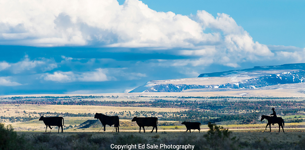 A silhouetted metal sculpture in eastern Oregon of a cowboy hearding cows with the Steens Mountains in the background.
