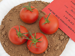 Prizewinning tomatoes in produce show at Whitemoor Allotments, Nottingham , England