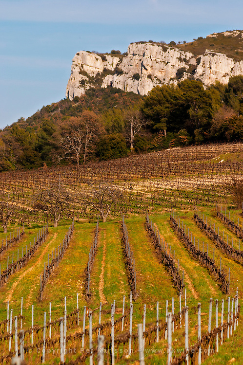 Graphic pattern vineyard and mountain cliff Château Barbanau and Clos Val-Bruyere Cassis Cote d'Azur Var France
