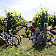Bikes parked amongst the vines at Triangle Red WInery during a tour with  On Yer Bike Winery Tours, a unique, one-day, cycling experience giving visitors the opportunity to enjoy tasting some of Hawkes Bay's finest foods and wines, while at the same time, taking in the superb scenery of the Ngatarawa Triangle, .cycle past vineyards, olive groves, orchards, horse studs, and farmland - all on flat terrain with wonderful vistas. Hawkes, Bay, New Zealand,, 4th January 2011. Photo Tim Clayton
