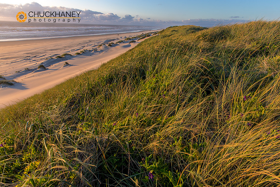 Sand dunes and Pacific Ocean in the Oregon Dunes National Recreation Area near Reedsport, Oregon, USA