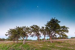 Trees on hillside at dusk in Hill Country between Blanco and Fredericksburg, Texas, USA