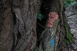 Denham, UK. 4 February, 2020. An ancient poplar tree in Denham Country Park threatened with imminent destruction by the HS2 high-speed rail link is decorated with the figures of tree spirits by environmental activists. It has also been marked with blue paint by HS2 engineers. Planned works in the immediate area are believed to include the felling of 200 trees and the construction of a roadway, Bailey bridge, compounds, fencing and a parking area.
