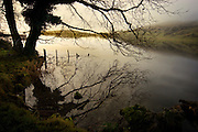 Lough Gur is one of the most subtley impressive and important archaeological sites in Ireland. With the largest stone circle and other megalithic sites, castles, entrances to the Land of Youth, lake dwellings, and layer upon layer of myth, it's one of my favourites places. ....This photograph was taken on 3rd of January  2006...