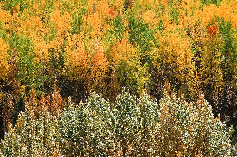 Alaska. Wrangell St Elias NP. Fall color.