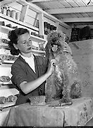07/07/1955<br /> 7 July 1955<br /> <br /> Special for Sunday Express - Dogs Hotel, Proprietor is a Major Hawkins