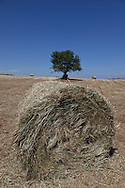 haystack, landscape of aubrac after the harvest, france  /  meule de foin, paysage de  l aubrac apres la moisson , France
