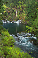 McKenzie River below the Blue Pool, Cascade Range Oregon