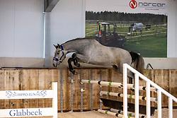 No Limit Mc Z, De Reydt Jessie<br /> The Special Free Jump Contest - Lubbeek 2021<br /> © Hippo Foto - Dirk Caremans16/10/2021